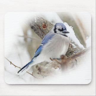 Blue Jay in Winter Snow Mouse Pad