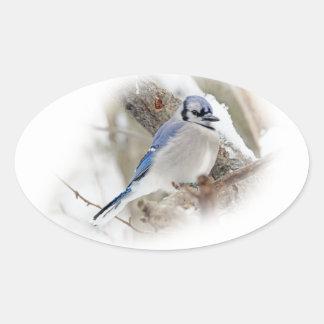 Blue Jay in Winter Snow Oval Sticker