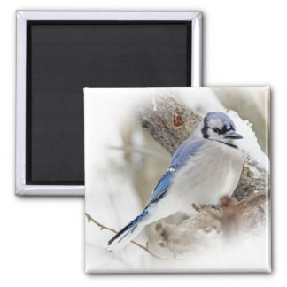 Blue Jay in Winter Snow Square Magnet