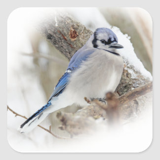 Blue Jay in Winter Snow Square Sticker