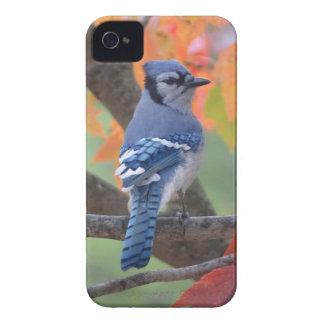 Blue Jay iPhone 4 Case-Mate Cases