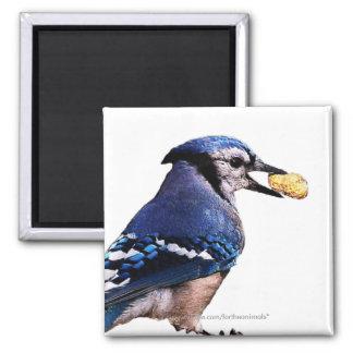 Blue-Jay -Magnet Magnet