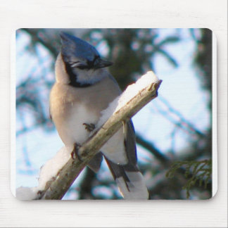 Blue Jay Mouse Pad