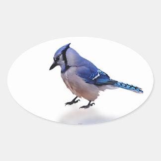 Blue Jay Oval Sticker