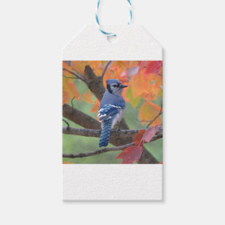 Blue Jay Pack Of Gift Tags
