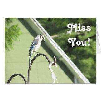 Blue Jay Photo Miss You Friendship Card