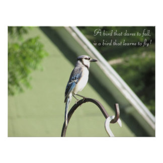 Blue Jay Photograph Inspirational Quote Poster