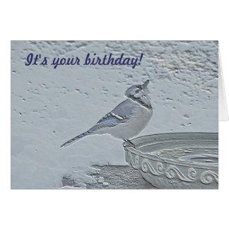 Blue Jay Songbird (Cyanocitta cristata) Card