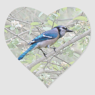Blue Jay Songbird Heart Sticker