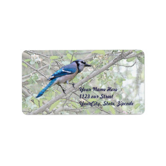 Blue Jay Songbird Label