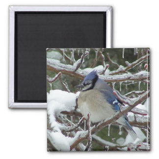 Blue Jay Square Magnet