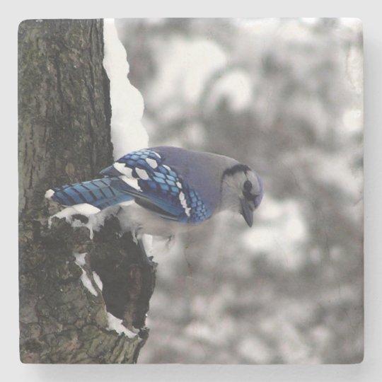 Blue Jay Stone Coaster