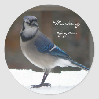 Blue Jay: Thinking Of You Sticker
