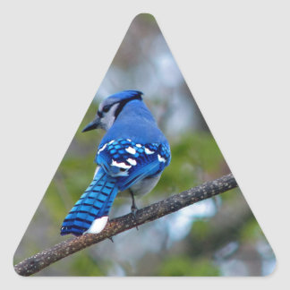 Blue Jay Triangle Sticker