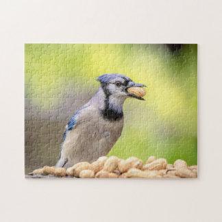 Blue jay with a peanut jigsaw puzzle