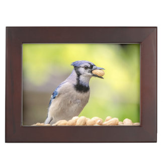 Blue jay with a peanut keepsake box