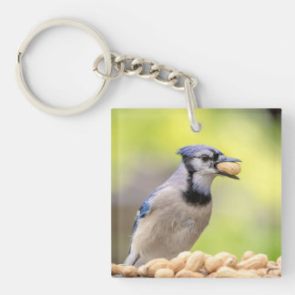 Blue jay with a peanut keychain