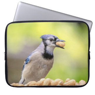 Blue jay with a peanut laptop sleeve