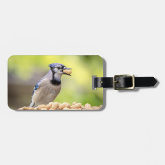 Blue jay with a peanut luggage tag