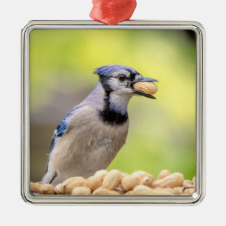 Blue jay with a peanut metal ornament