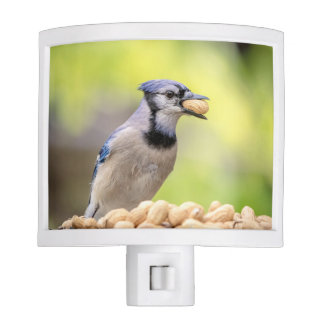 Blue jay with a peanut night light