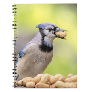 Blue jay with a peanut notebooks
