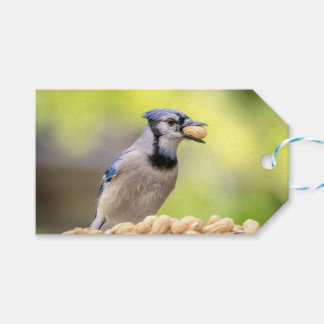 Blue jay with a peanut pack of gift tags