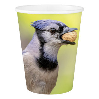 Blue jay with a peanut paper cup