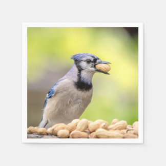 Blue jay with a peanut paper napkins
