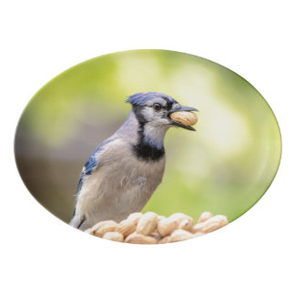Blue jay with a peanut porcelain serving platter