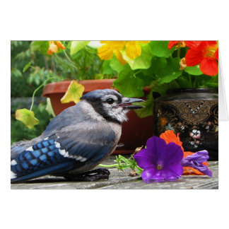 Blue Jay with Flowers Card