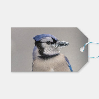 Blue jay with snow on his beak pack of gift tags