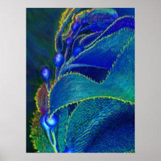 blue kelp poster