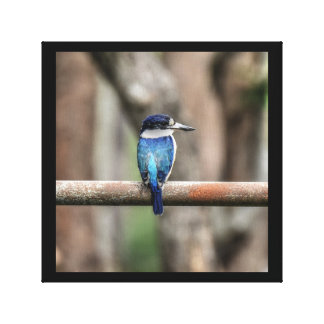 BLUE KINGFISHER QUEENSLAND AUSTRALIA ART EFFECTS CANVAS PRINT