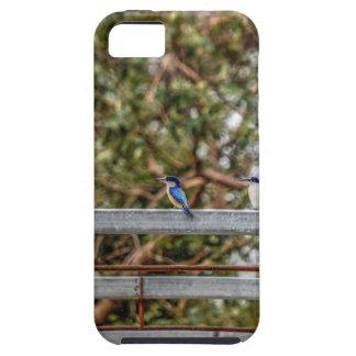 BLUE KINGFISHER QUEENSLAND AUSTRALIA ART EFFECTS iPhone 5 CASE