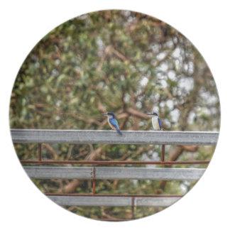 BLUE KINGFISHER QUEENSLAND AUSTRALIA ART EFFECTS PLATE