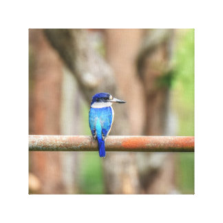 BLUE KINGFISHER QUEENSLAND AUSTRALIA CANVAS PRINT