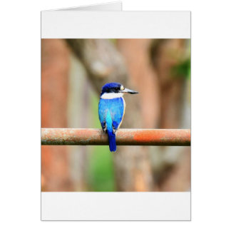 BLUE KINGFISHER QUEENSLAND AUSTRALIA CARD