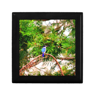 BLUE KINGFISHER QUEENSLAND AUSTRALIA GIFT BOX