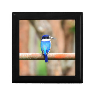 BLUE KINGFISHER QUEENSLAND AUSTRALIA KEEPSAKE BOXES
