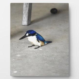 BLUE KINGFISHER QUEENSLAND AUSTRALIA PLAQUE