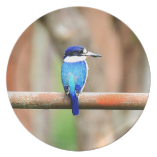 BLUE KINGFISHER QUEENSLAND AUSTRALIA PLATE