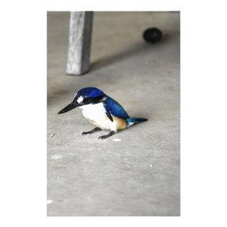 BLUE KINGFISHER QUEENSLAND AUSTRALIA STATIONERY