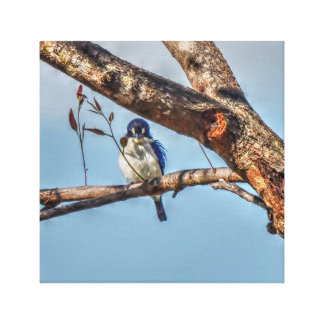 BLUE KINGFISHER QUEENSLAND WITH ART EFFECTS CANVAS PRINT