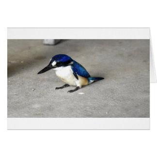 BLUE KINGFISHER RURAL QUEENSLAND AUSTRALIA CARD