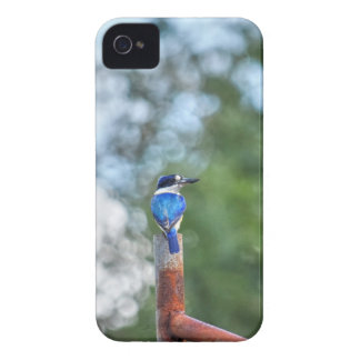 BLUE KINGFISHER RURAL QUEENSLAND AUSTRALIA iPhone 4 Case-Mate CASES