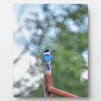 BLUE KINGFISHER RURAL QUEENSLAND AUSTRALIA PLAQUE