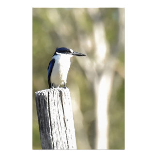 BLUE KINGFISHER RURAL QUEENSLAND AUSTRALIA STATIONERY