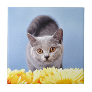 Blue kitten tile