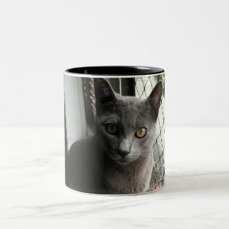 Blue kitty mug